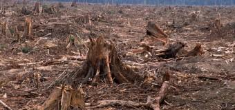 Tüm Dünya Halkları Doğanın Metalaştırılmasına Karşı